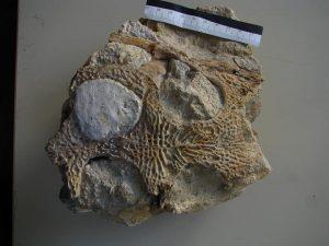Paleontólogos portugueses anunciaram o mais antigo crocodilo fóssil conhecido