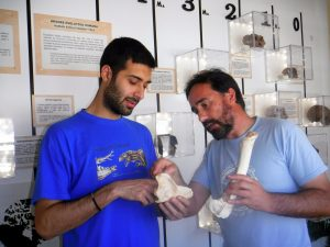 Tese demonstra extinção significativa em Portugal