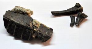 Pequeno esqueleto mostra a evolução dos crocodilos